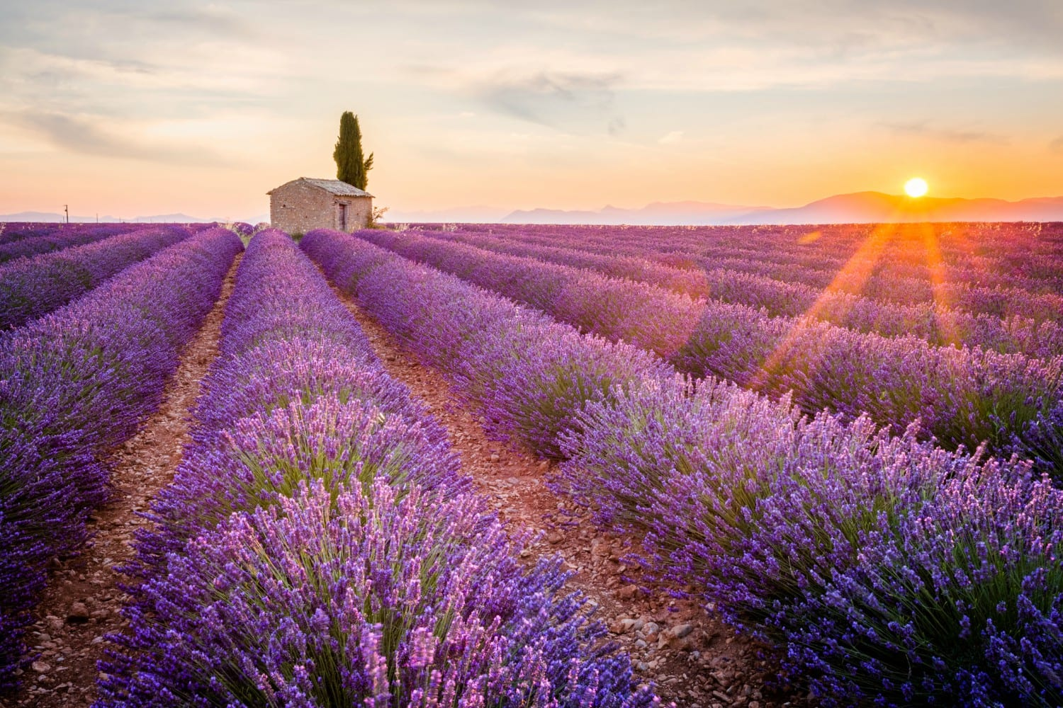 Your guide to enjoying the best day at purple adobe for Lavendelfelder provence